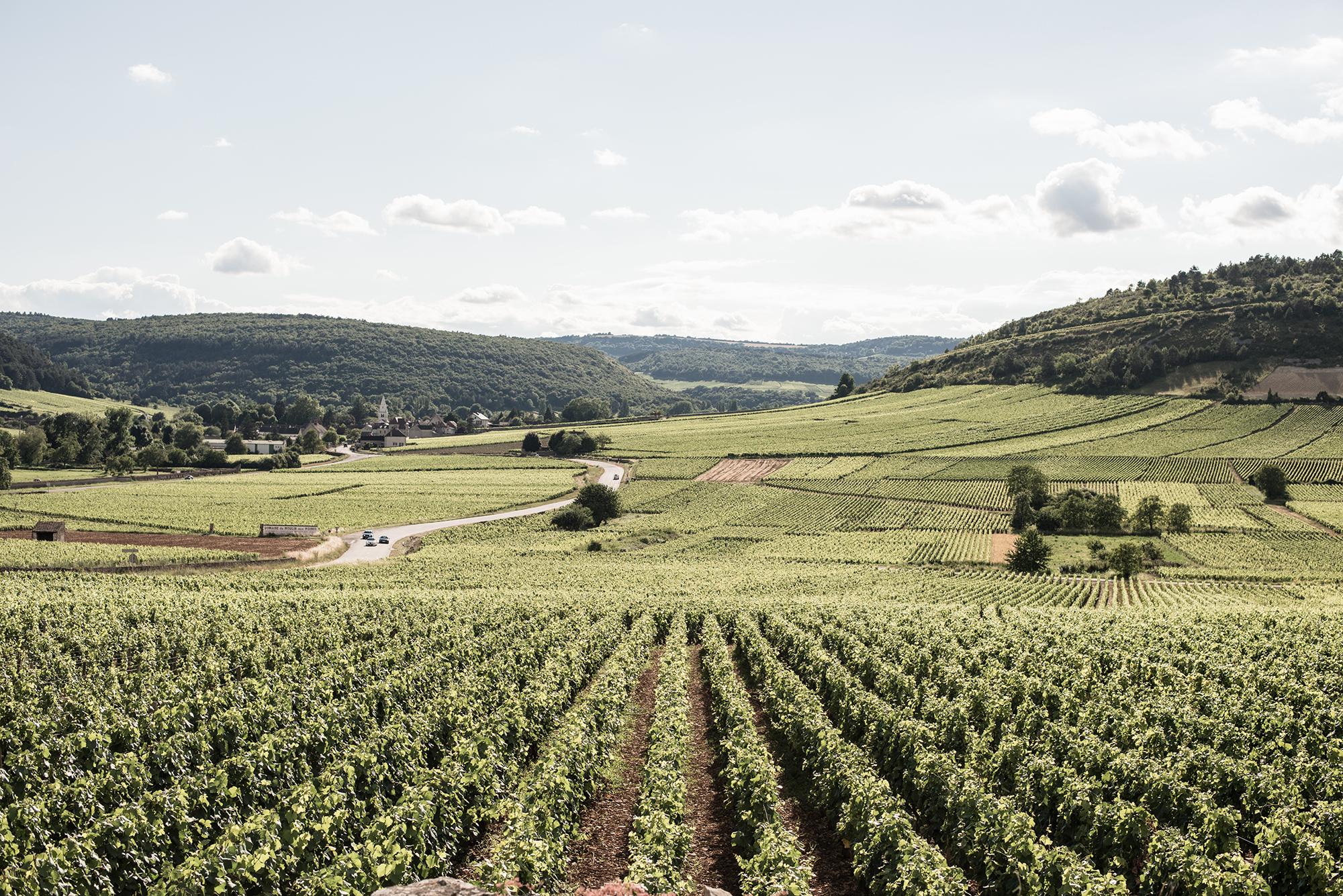 Vignes, Vignerons, Vins